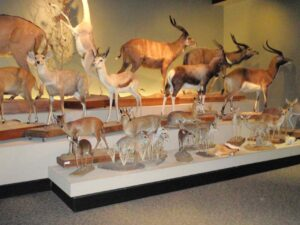 Oaks Museum of Natural History